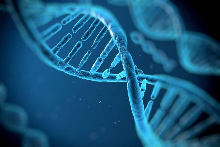Fertilização in vitro pode prevenir doenças hereditárias no embrião?