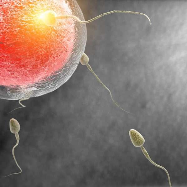 tratamentos para engravidar
