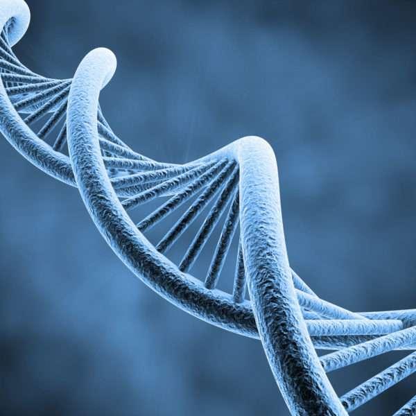 Fragmentação do DNA Espermático