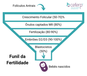 Funil da Fertilidade